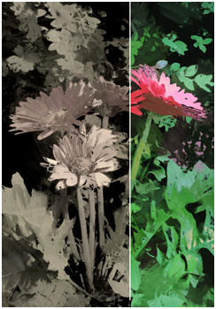 Free Garden Flower Paint-Over Pattern - Click to download an underpainting that you can use to create easy art with oils or acrylics.